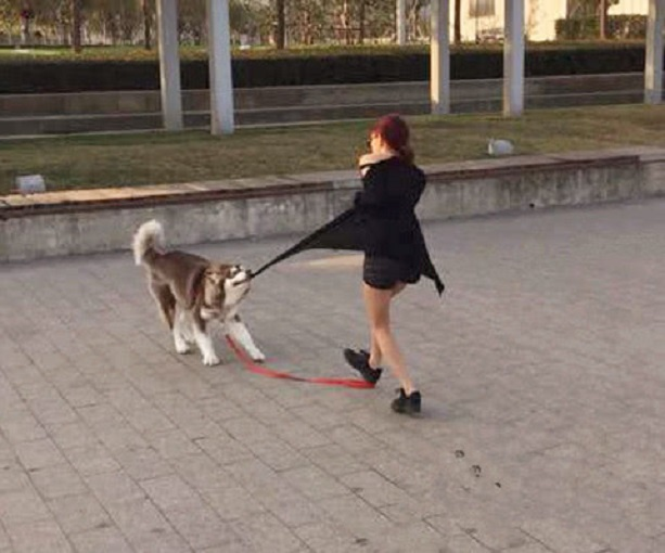 搞笑GIF:狗狗加油,平时吃了我那幺多狗粮,轮到你报答我了