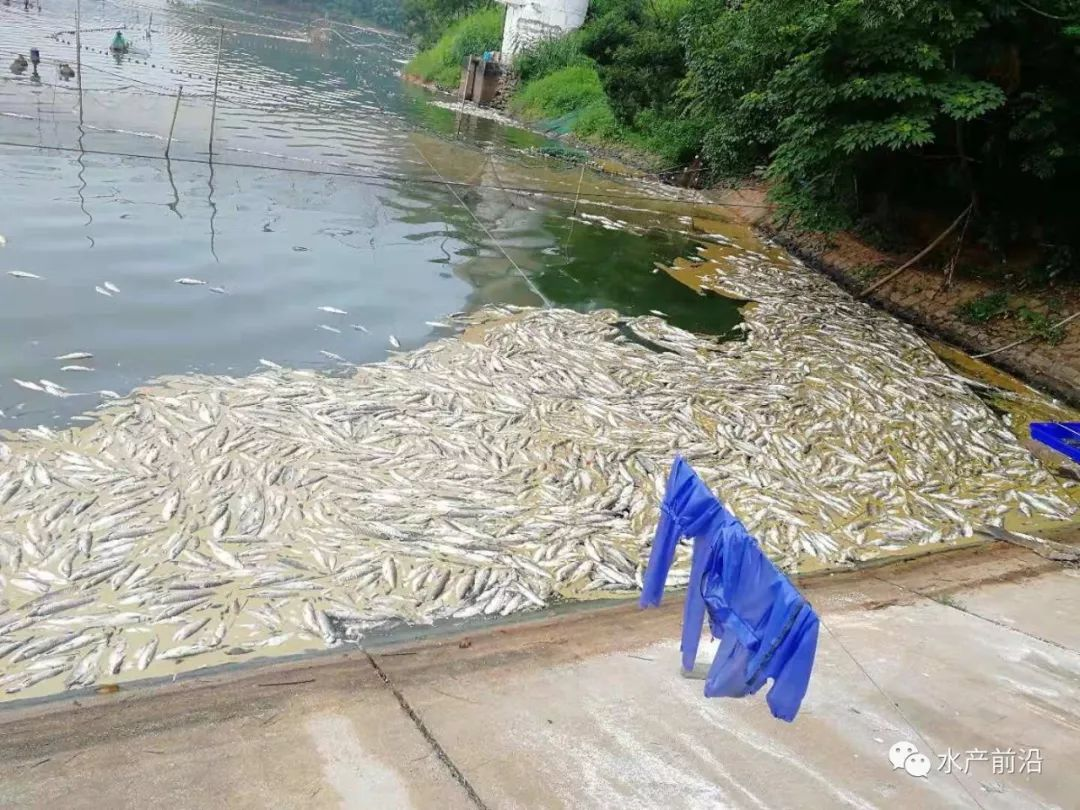 池塘亚硝酸盐超标治理_池塘亚硝酸盐正常值_鱼塘亚硝酸盐多少正常