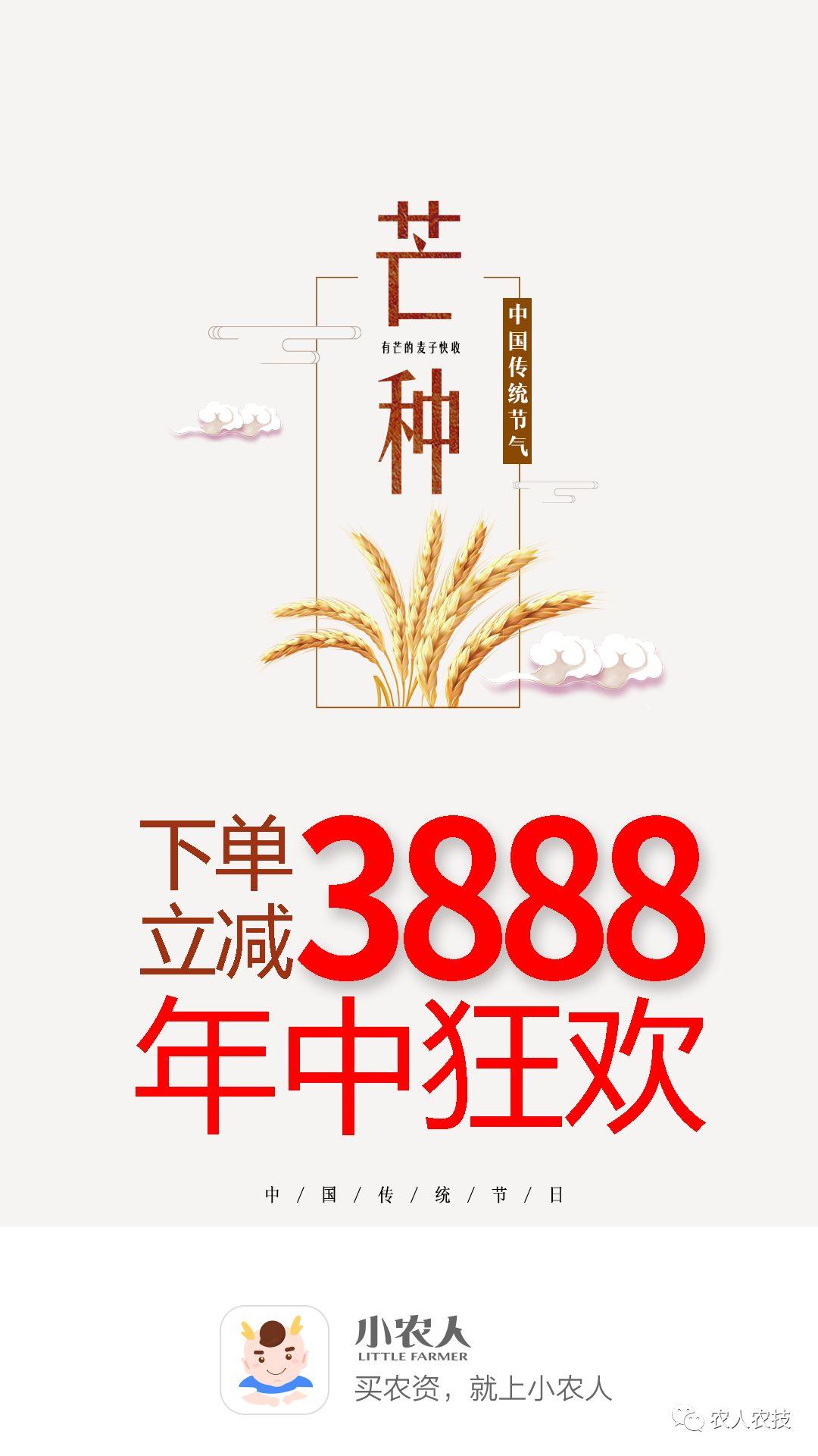 水稻成长过程绘画作品