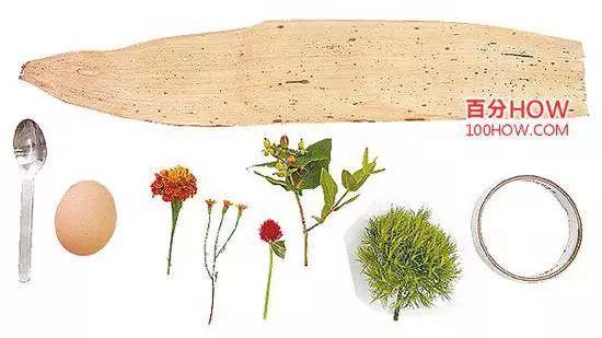 干燥的粽叶一叶,火龙果和绿石竹各1枝,圆仔花和孔雀菊和万寿菊各1朵图片