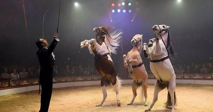 摒弃了活体动物表演的马戏团,为观众献上一出高科技的另类动物秀