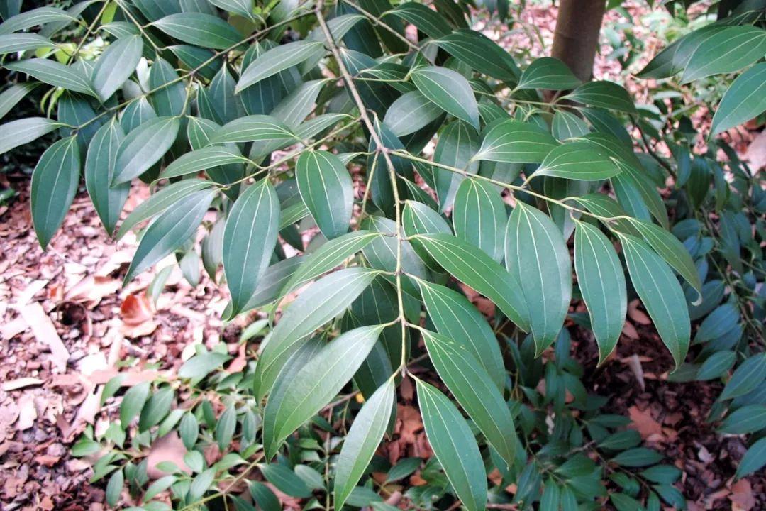 背景 壁纸 绿色 绿叶 树叶 植物 桌面 1080_720图片
