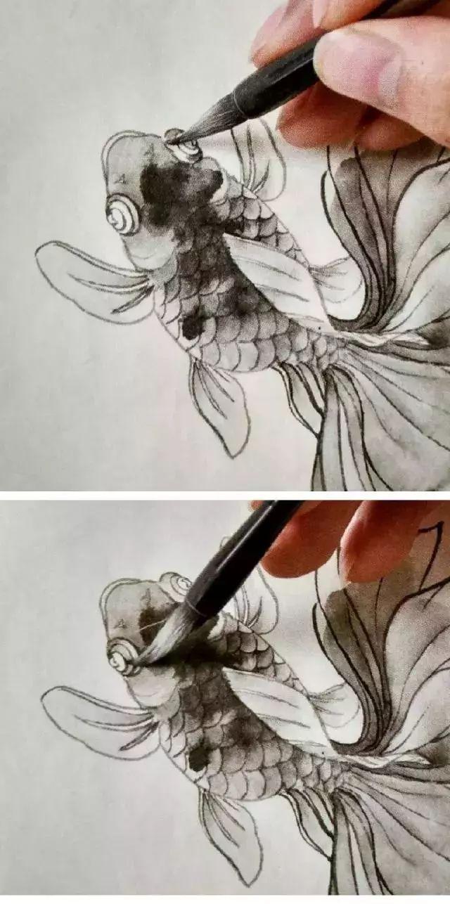 10步教你画工笔金鱼,头部,鳞片,鱼鳍和鱼尾,画出的鱼圆润弹性