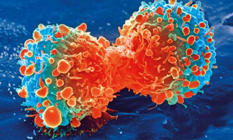 乳酸竟会降低免疫力!科学家发现治疗病毒感染新策略