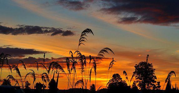 长天落日,彩霞齐飞,所有的光明一点点融化在地平线上,形成了一条蔓延图片