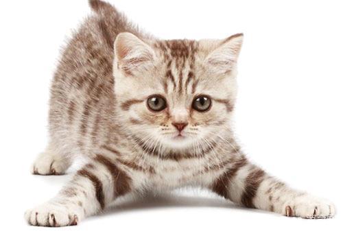 猫咪喝羊奶粉的好处