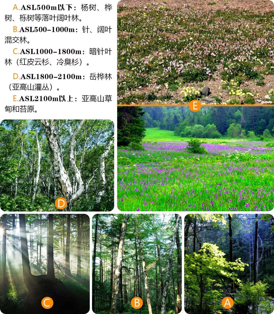 优暑假 解密中温带神秘原始森林,登临东北亚最高峰的清凉夏日 两期