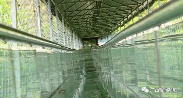 吓人!玻璃滑道护栏被撞破致人死伤,游客回忆惊魂瞬间
