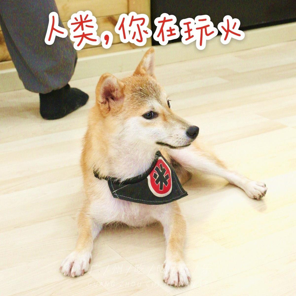 妞妞2015无需播放器下午撸_撸柴犬的日式小屋,和服免费穿,还能喝下午茶!广州也有