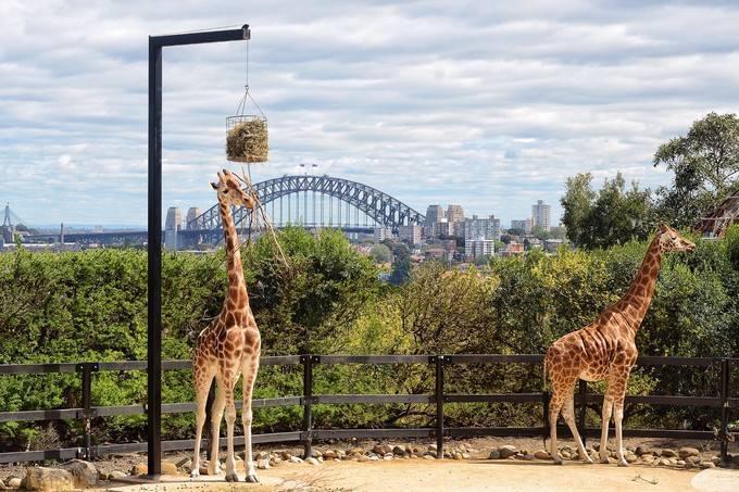 澳大利亚自由行最新v攻略攻略-悉尼泰朗加动物园游玩天地劫攻略1.17正式版攻略图片