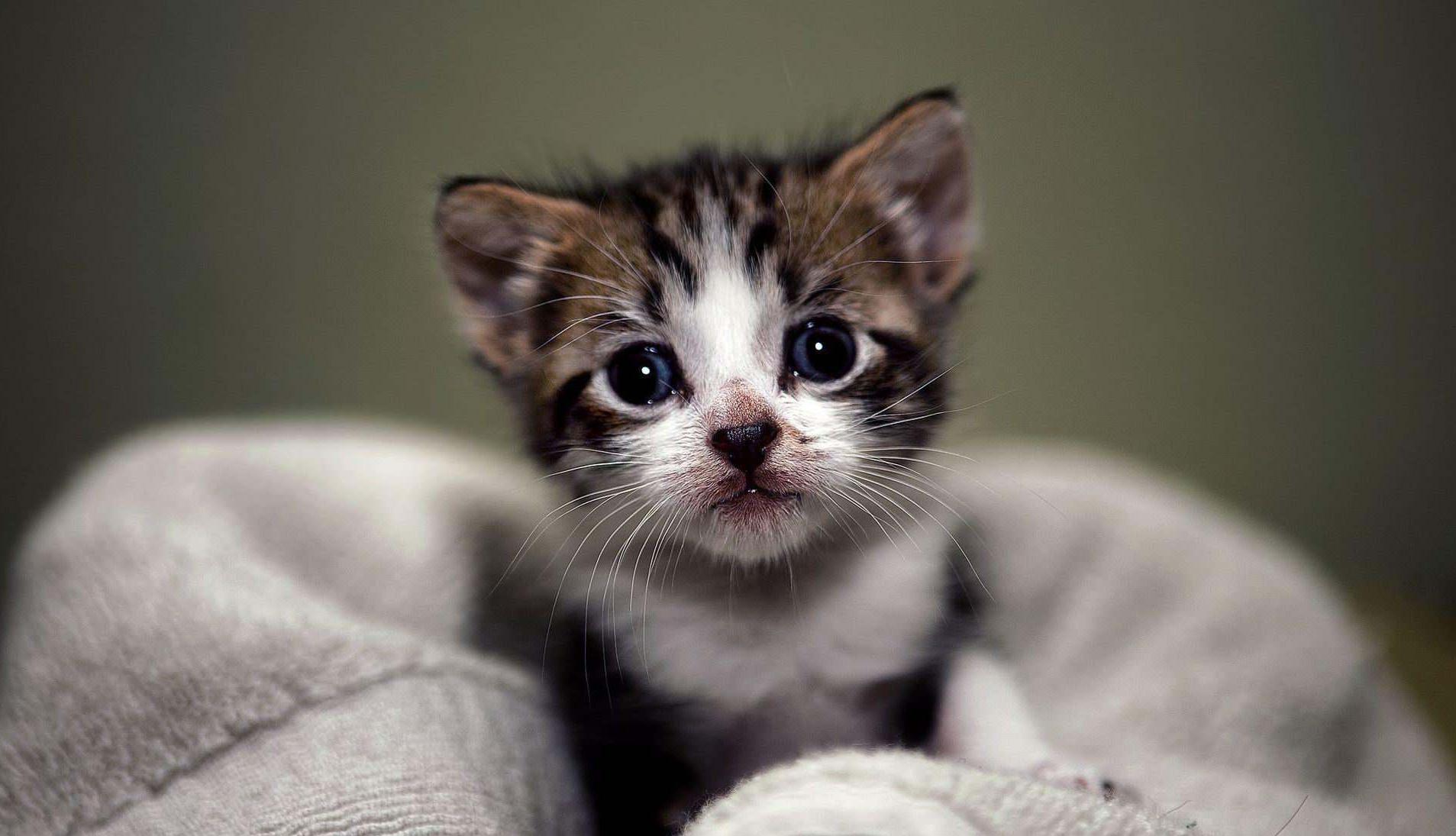 动漫猫咪图片