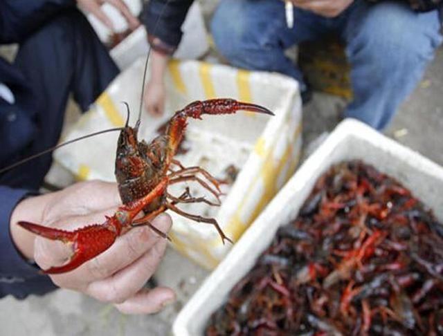 在菜市场里,为啥 虾尾 比整只小龙虾要便宜 其中猫腻你该知晓