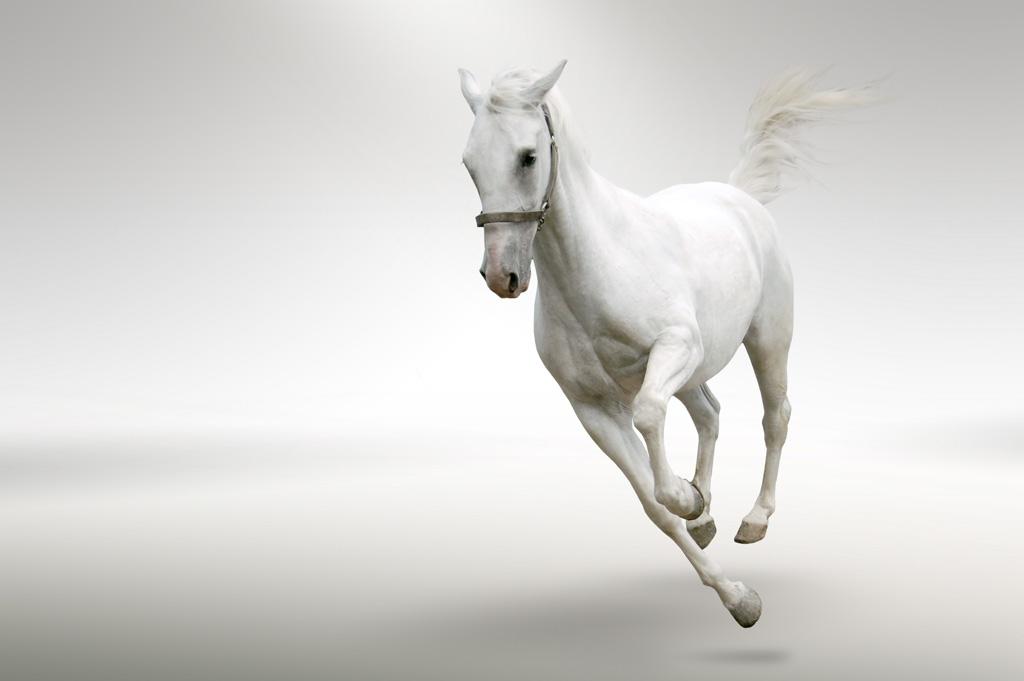 什么色什么马的成语_成语故事图片