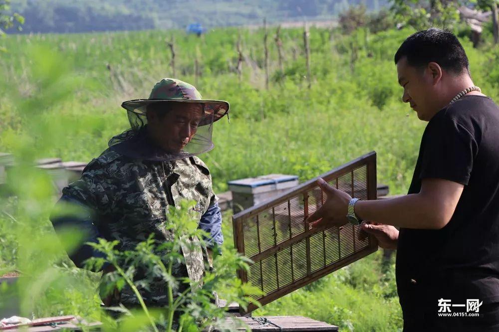 在距离油菜花田50米处,几十箱小蜜蜂正在为采蜜而忙碌.图片