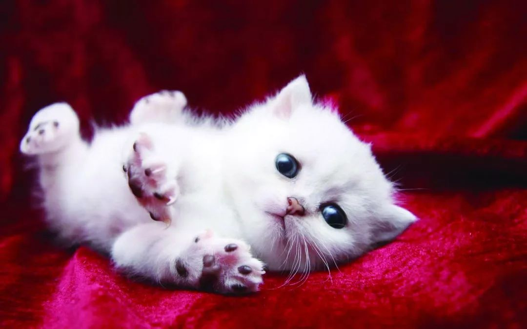 如何选择猫奶粉?