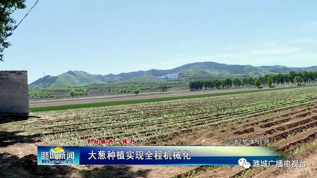 【乡村振兴 】大葱种植实现全程机械化