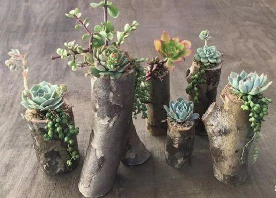 接下来小花来教大家如何制作木桩花盆