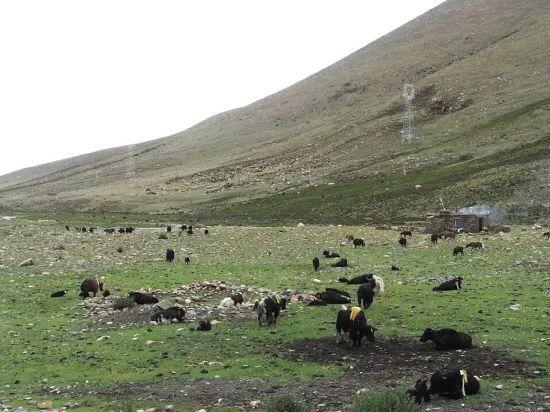 网上养牛赚钱是真的吗图片