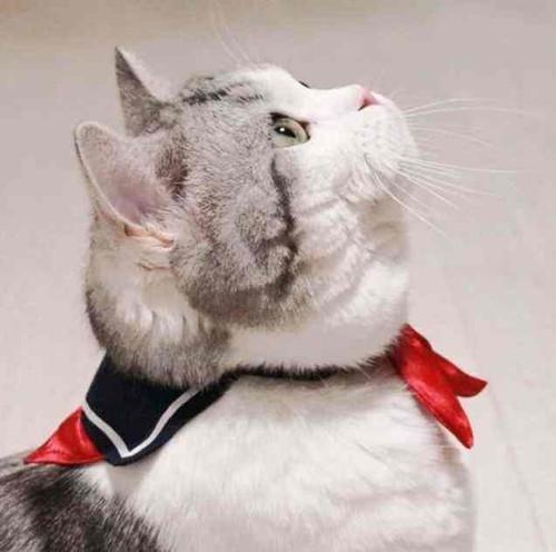 猫咪应激反应呕吐图片
