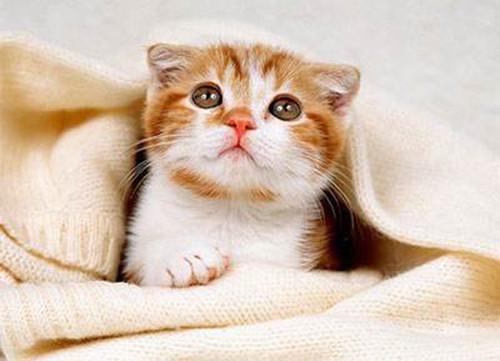 猫咪应激反应症状图片