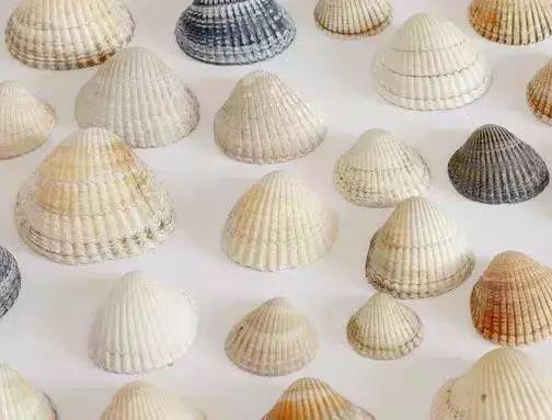 diy海洋环保包