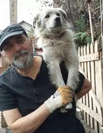 狗狗走失流落街头,当主人找到它时,它的反应真的很戳心...