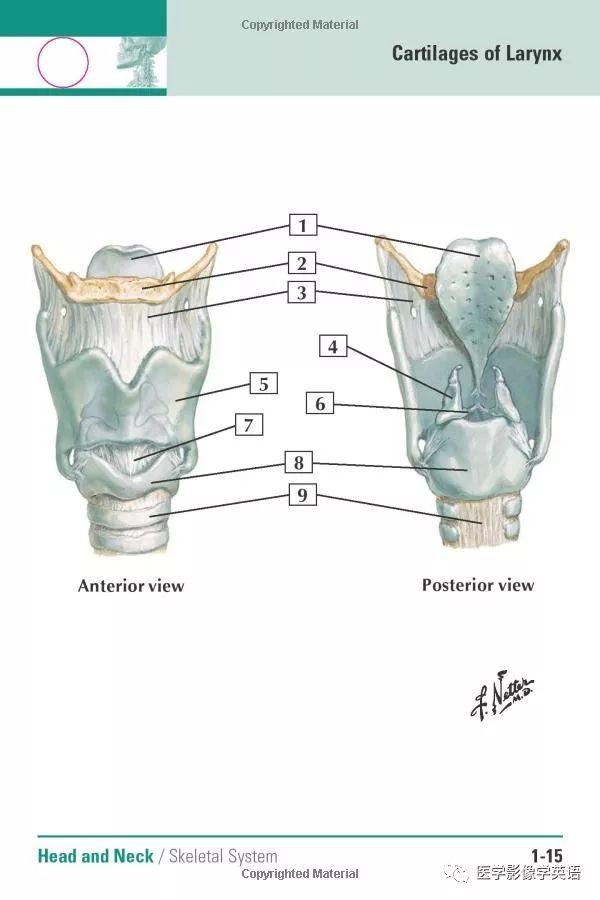 丁香文档微整形注射解剖学