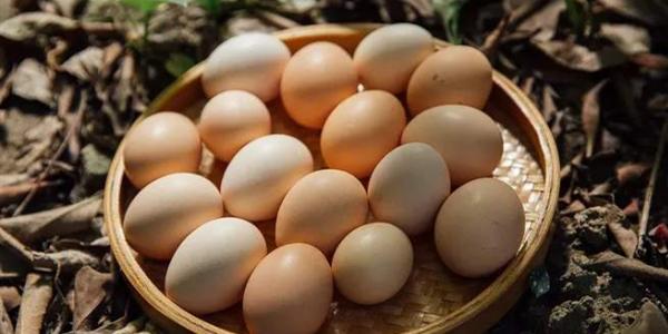 深圳卫健委 | 你从乡下带的土鸡蛋,或许还不如超市买的普通蛋