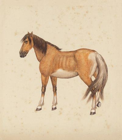 大明王朝对马的庄严祭祀及马匹管理相关情况上图片