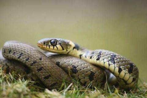 亿城娱乐1989年今年多大了属蛇2020年运势及