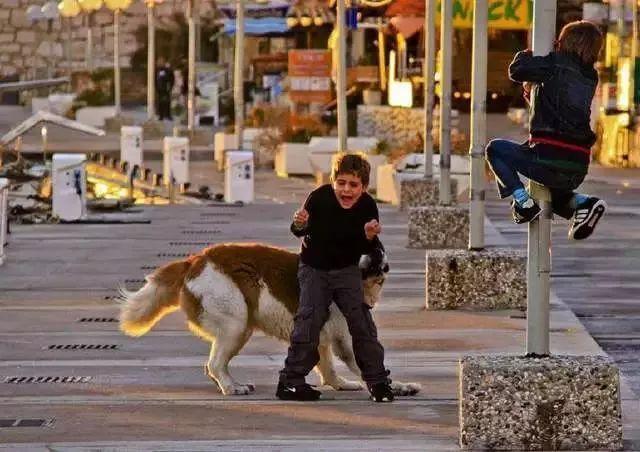 男孩遭寵物犬撕咬意味著什么?男孩遭寵物犬撕咬具體情況