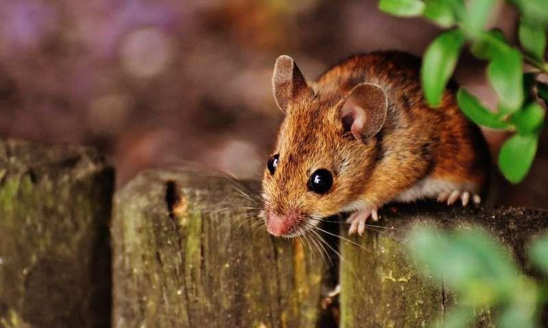 万物有趣 | 延长寿命不是梦!年轻小鼠的血液让老年小鼠活得更久
