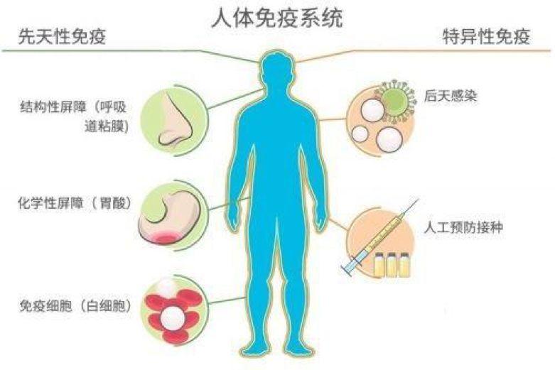 免疫 細胞 性