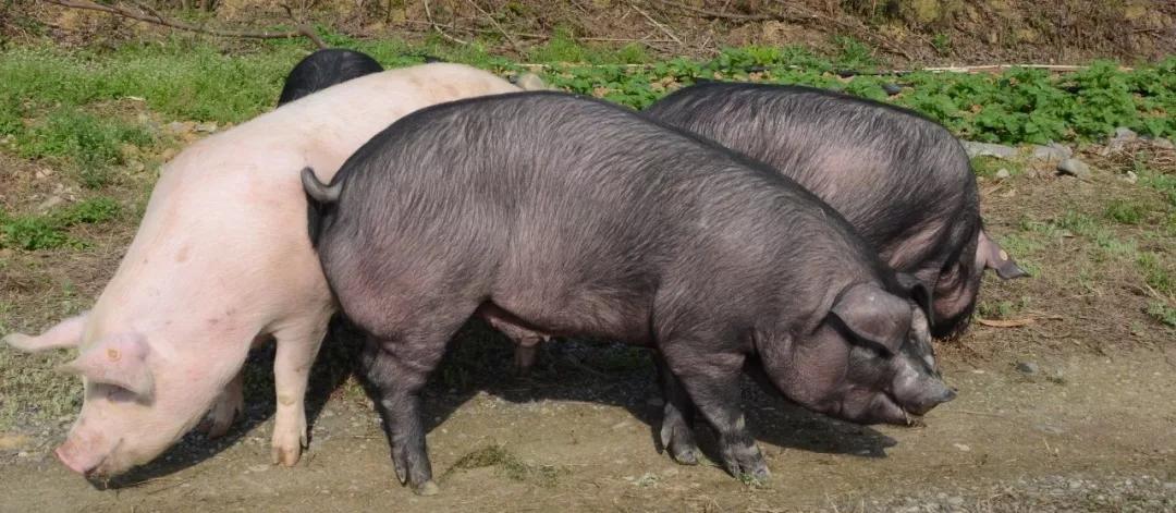 牛肉快速减肥法 怎么吃图片