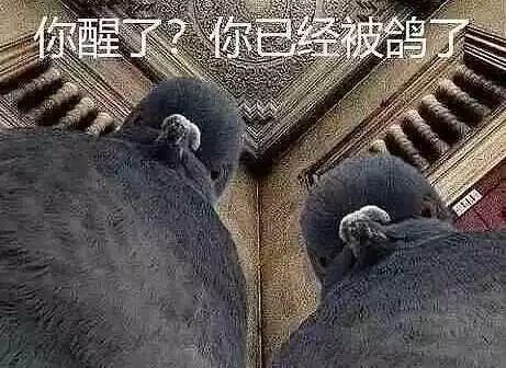 撸撸专用视频_男子高速公路应急车道停车 看不雅视频提个神