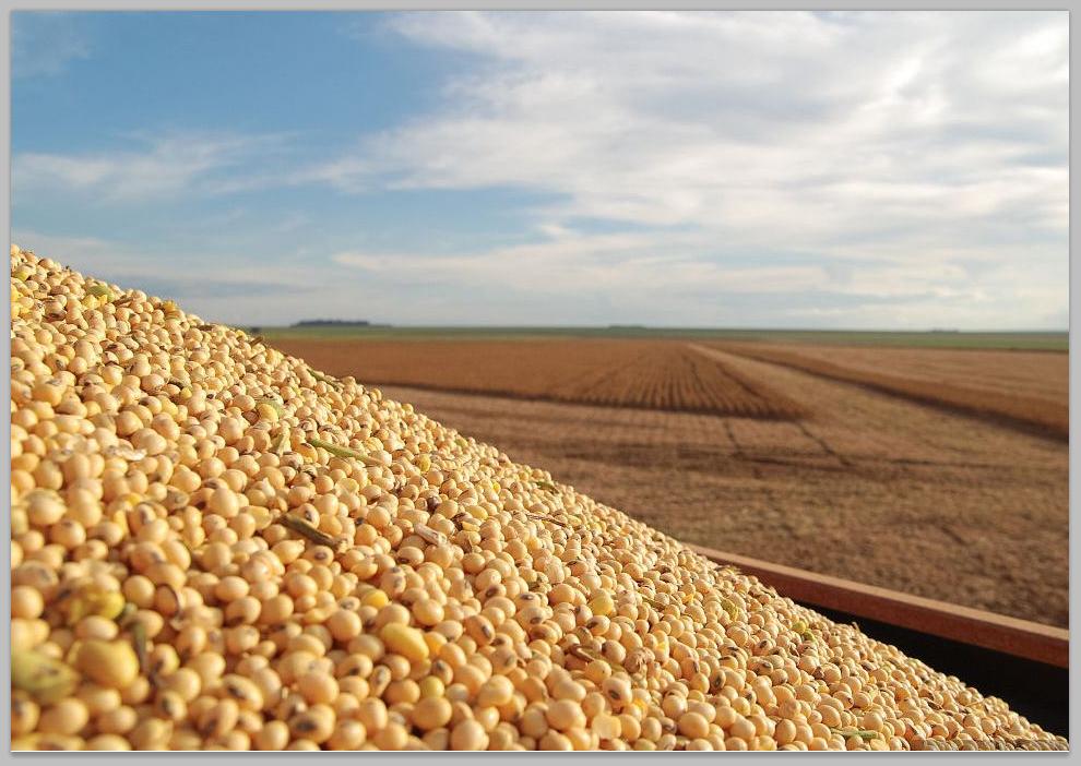 珍珠港事件美國損失 美國豆農傷得不輕,這次他們損失不小!