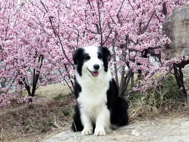 从养狗狗看出你的性格,请对号入座吧