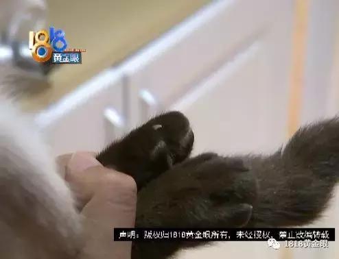 琪琪色撸影院_撸猫馆玩猫,女儿被抓伤了,店方却说:\