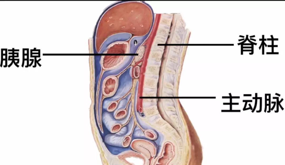 说不清道不明的腹部不适到底有多可怕?劝你这样查胰腺癌!