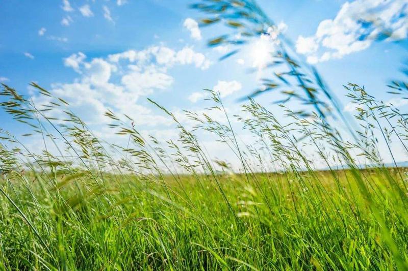 呼伦贝尔草原有哪些旅游景点?门票价格是多少?