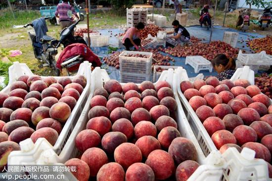 夏季吃桃补中益气 但要吃得健康你还要知道这些:补中益气