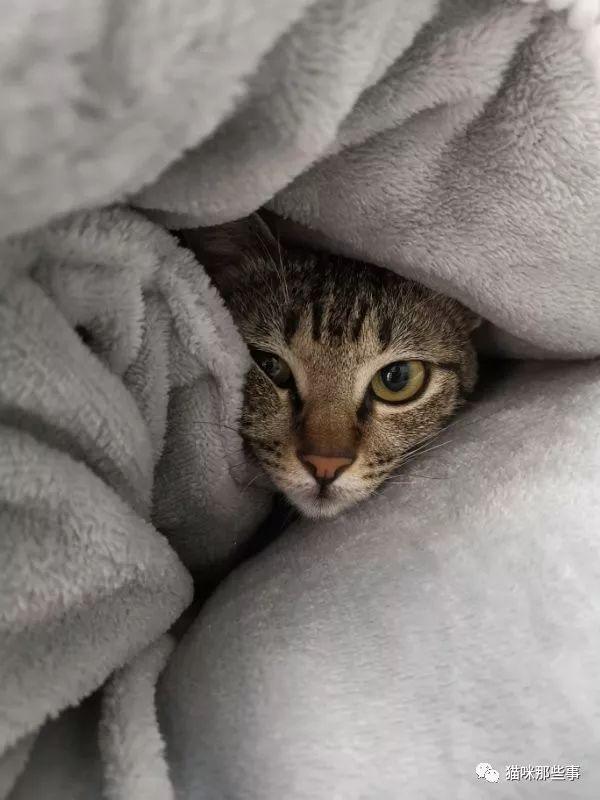 这是思春猫么?