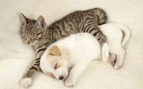 鲁鲁射人和动物_娱乐 正文  第一二位:猫,狗 猫狗是和人类最亲近的动物,都通人性,都是
