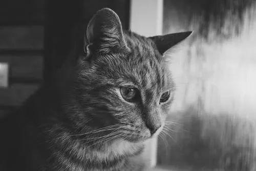 猫咪胆小怕人怎么办图片