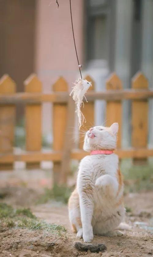 猫猫胆小怎么做朋友图片