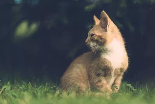 猫咪胆小不亲近人图片