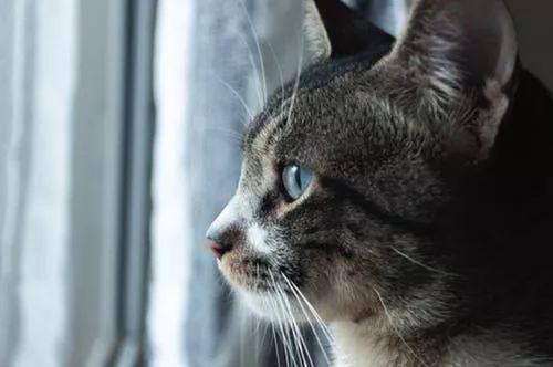 猫咪胆小怎么办图片