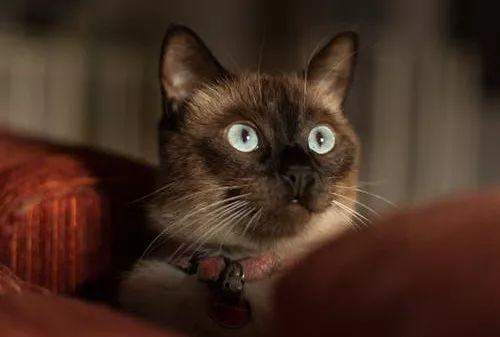 猫咪胆小怎么才能变胆大图片