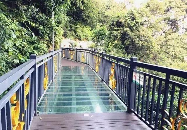 """周末嗨起来!广东11个""""网红""""玻璃桥打卡点推荐东莞有2个…(图5)"""