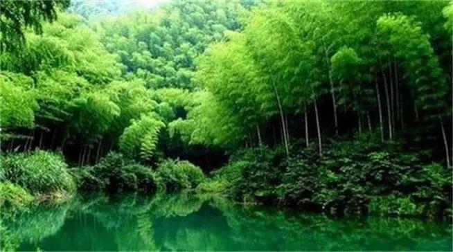 杭州最美才不是西湖,双溪竹海美爆了图片